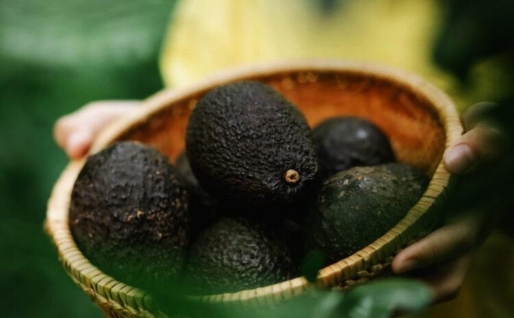 Cocina sostenible: la receta culinaria para cuidar del planeta